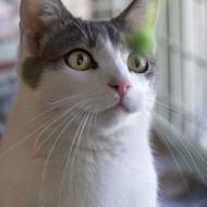 Cat Guardians 108 Leyden