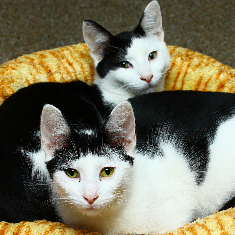 Half Face and Sidekick are both litter mates and best pals!