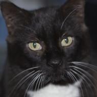 Cat Guardians 020 Sylvester