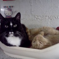 Beanie Baby and Garfield share a comfortable spot