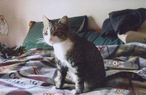 Female Cat Missing Litter Box