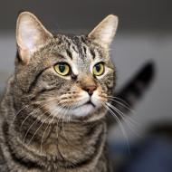 Cat Guardians 034 Benji