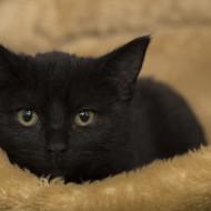 Cat Guardians Kittens 011 New Kitten 1