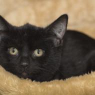 Cat Guardians Kittens 021 New Kitten 3