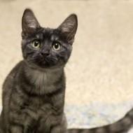 Lena Cat Guardians small 026