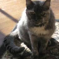 Kit Cat 1