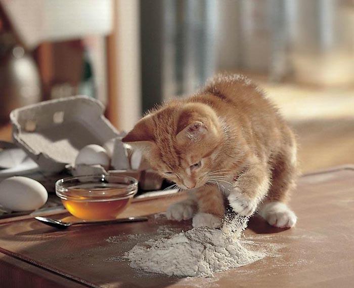 cat-making-pancakes