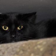 Cat Guardians 013 Romy (1)