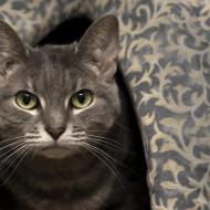 Cat Guardians 015 Sacha