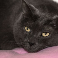 Cat Guardians 040 Janet