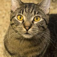 CDs Cat Guardians 037 Tuttle