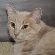 Cat Guardians 016 Blondie