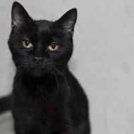 Cat Guardians 039 Sinder