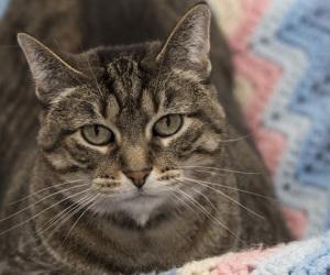 Cat Guardians 076 Tinkerbell