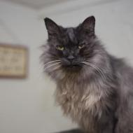 Cat Guardians 123 Miss Fang
