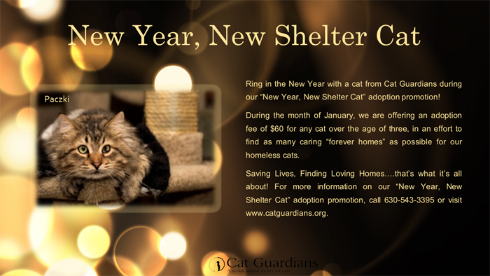 New Year New Shelter Cat! (Jan)