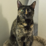 Cat Guardians 024 Cleo