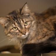 IMG_8873 Cat Guardians 2015 Mitzi