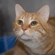 IMG_8925 Cat Guardians 2015 Kitty Jackson