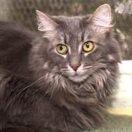 IMG_8928 Cat Guardians Gabby